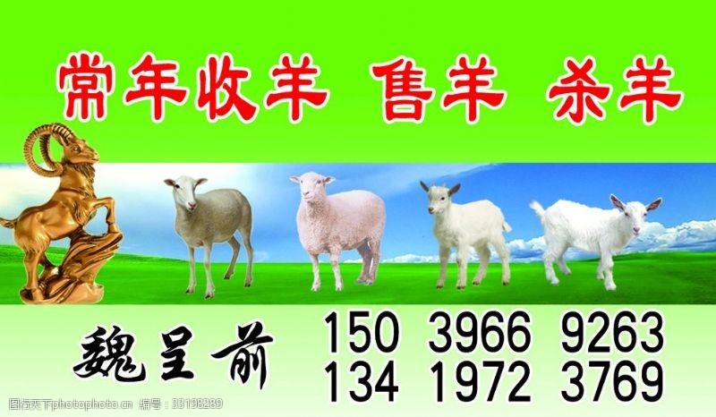 常年收羊名片