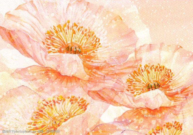 罂粟花绽放插图