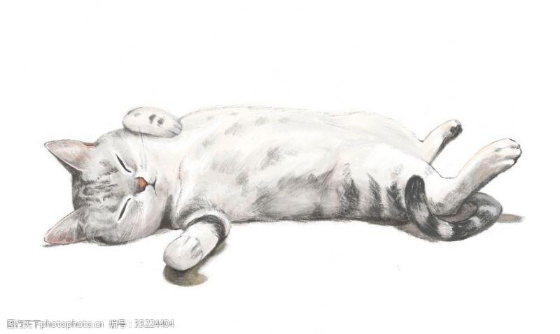 懒散猫插图