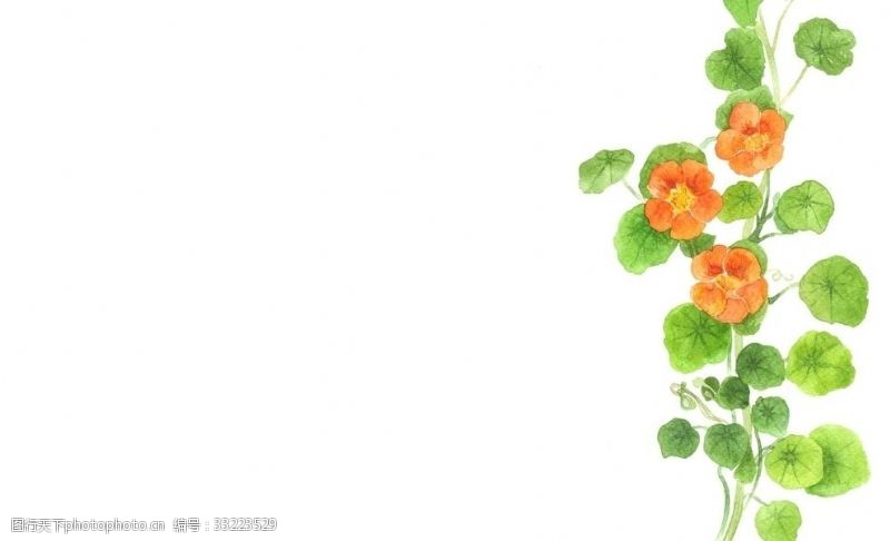 无名花水彩插图