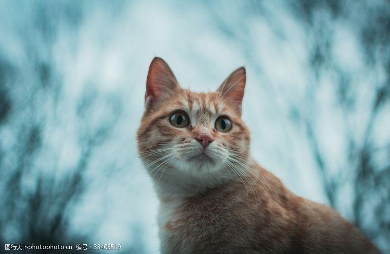 保護區小貓