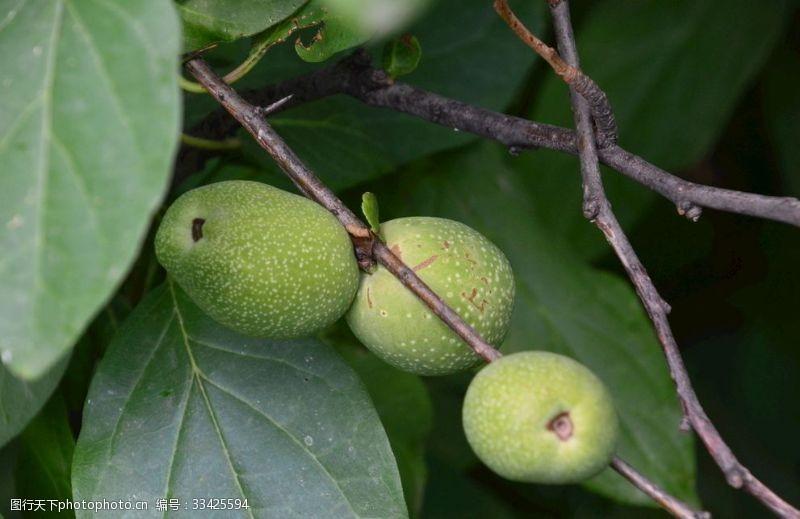 果品青果水果绿化景观植物