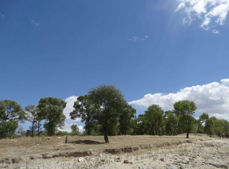 保護區藍天白云樹木