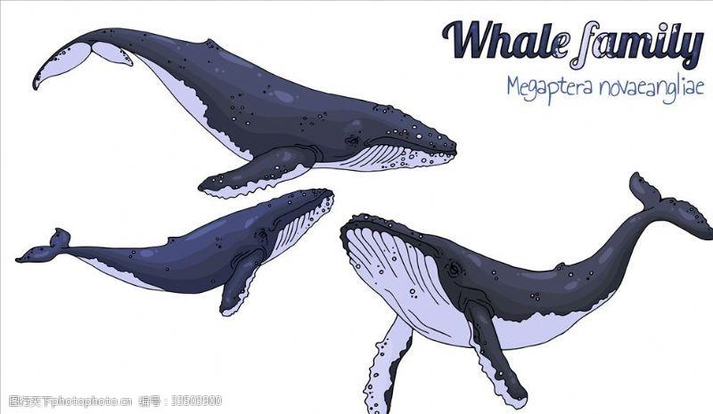藍色背景鯨魚