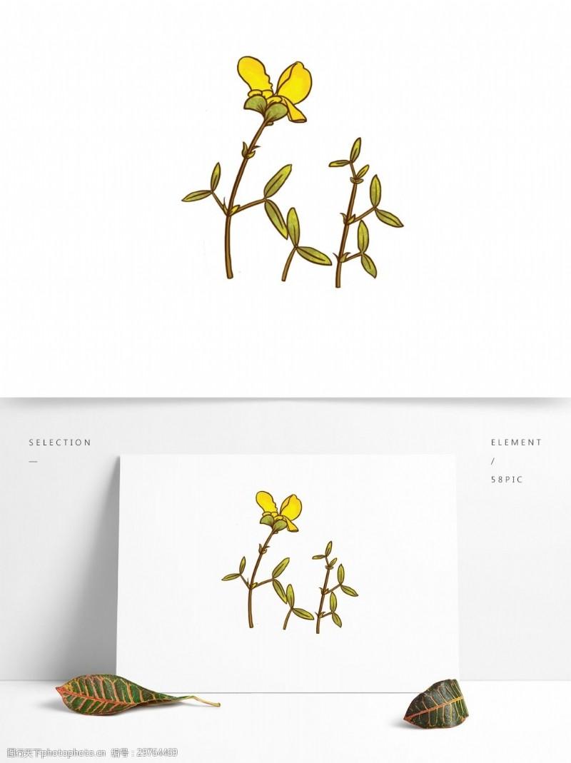 黄色小花植物牛角花百脉根五叶草