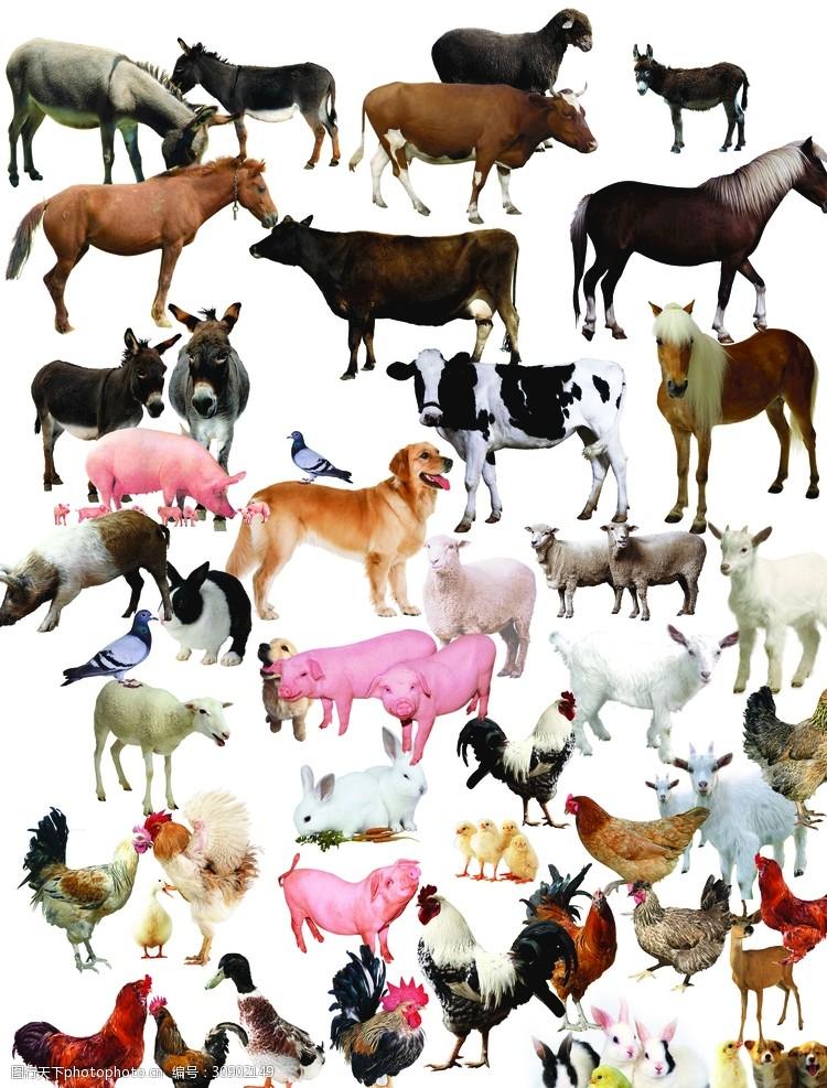 动物名片动物家畜
