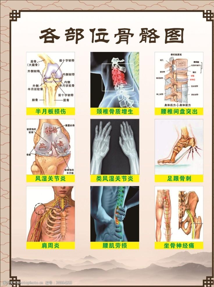 人体器官图人体各部位骨骼图