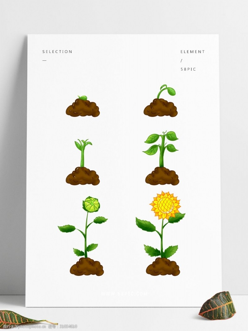 简笔画矢量图_植物生长过程图片免费下载_植物生长过程素材_植物生长过程模板 ...