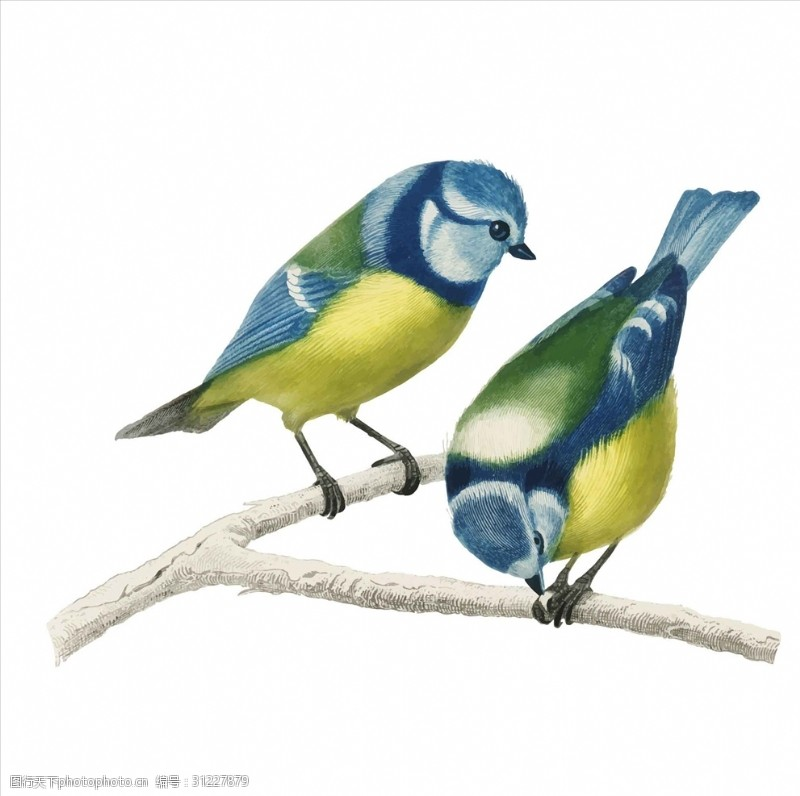 小鸟插图矢量小鸟