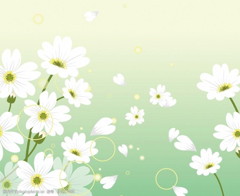 花式背景小清新小白菊绿色背景装饰画