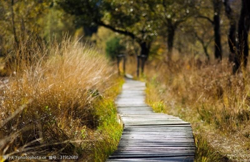 木头桥林间木头路