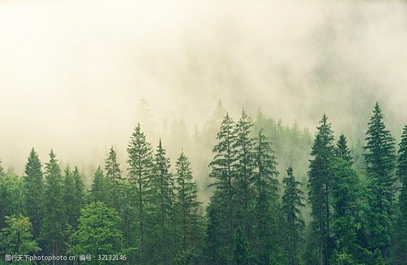 艺术天空树木