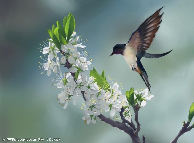 约惠暖春春天花卉小鸟