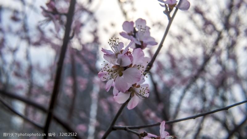 植物系列之三月桃花开