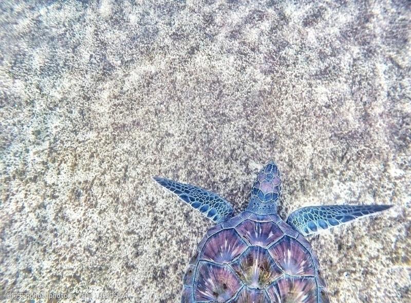 小龟王海龟