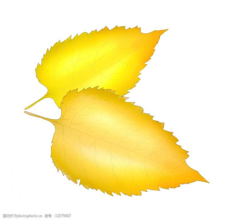 心形树叶秋天黄色树叶插图