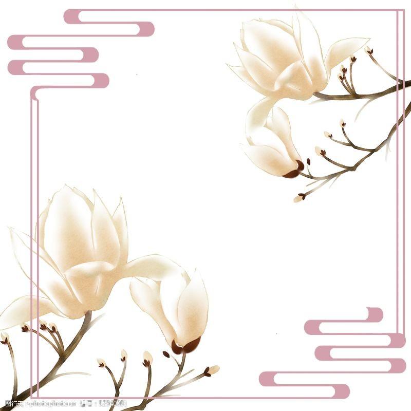旱荷花木兰树望春花早春花卉边框