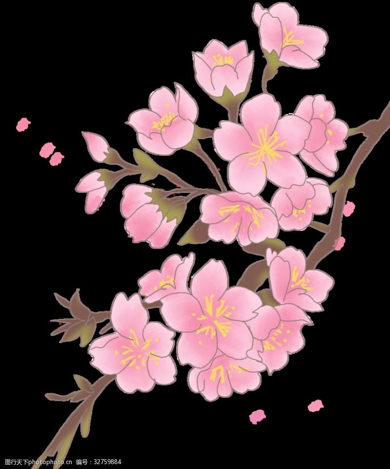遇见樱花樱花