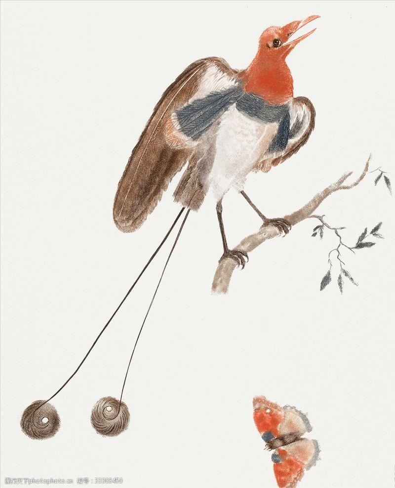 小鸟插图手绘小鸟